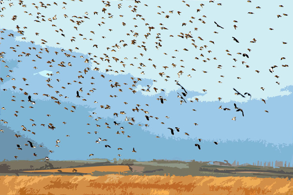 Birds-over-Oare-Marshes
