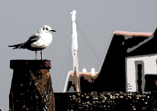 Black Headed Gull on Groyne at Whitstable