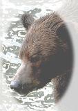 Brown Bear (Canada)