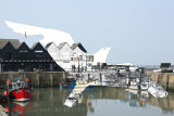 Gull and Whitstable Harbour Cutout 2