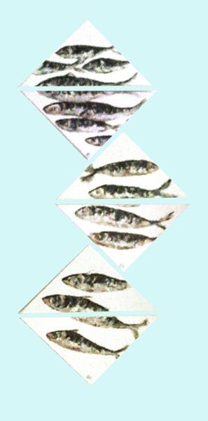 Triangulated-Mackerel