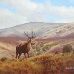 Stag on Exmoor