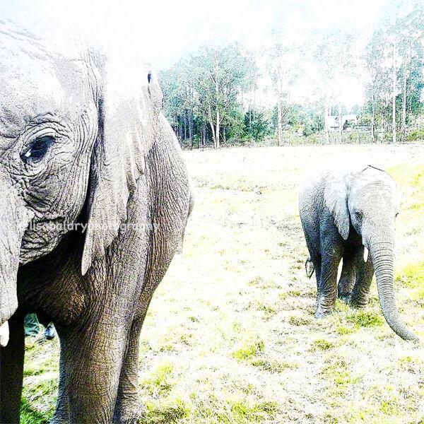 Nature : Elephants