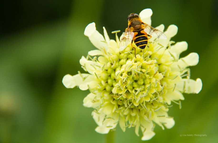Nature : bee at work!