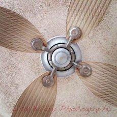 Arabian fan