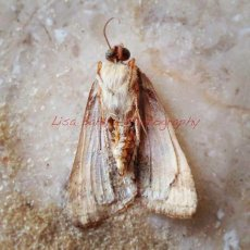 Moth … found when waiting for supplier on site visit