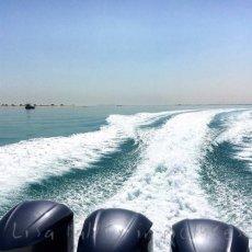 Safliya Island ... Desert Life!