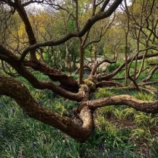 Nature doesn't always follow form!  A beautiful walk at Wisley Gardens ..