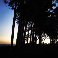 Sunset when out for a bike ride : Paul Cluver wines, Grabouw, South Africa