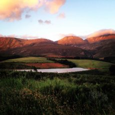 Out for a run : Paul Cluver Wines, Grabouw, South Africa