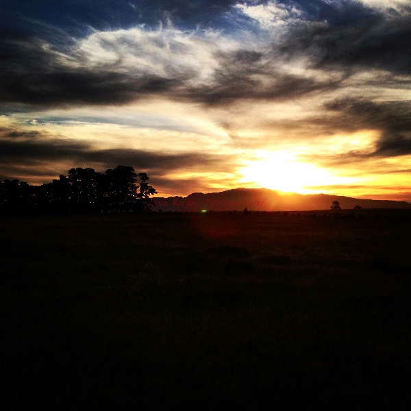 Sunset at Paul Cluver Wines!