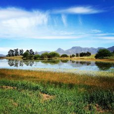 Natural Beauty !! Paul Cluver Wines, Grabouw, South Africa