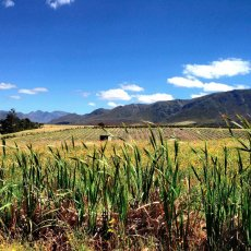Solo bike ride … morning sunshine : Paul Cluver Wines, Grabouw, South Africa