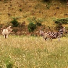Admiring the wild life : Paul Cluver Wines, Grabouw, South Africa