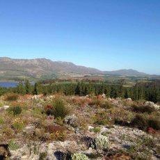 Trail Run : Grabouw, South Africa
