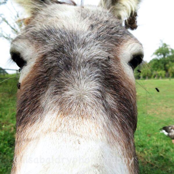Nature : Donkey
