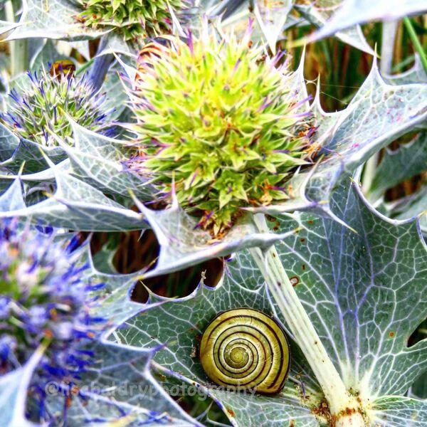 Nature: snails, foliage, Herm Island
