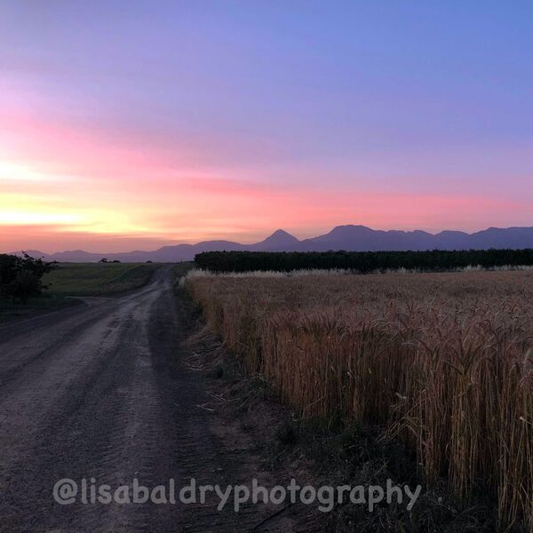 Nature : Sunset - Paul Cluver Wine
