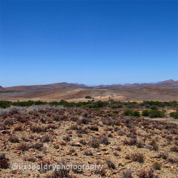Nature : Kleinkaroo, Anysberg Nature Reserve, South Africa