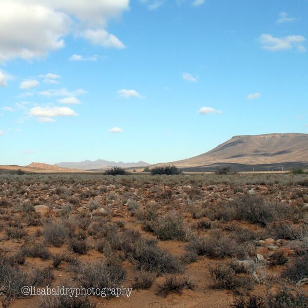 Nature : Kleinkaroo, Anysberg Nature Reserve, South Africa