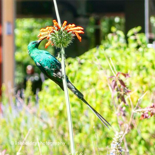 Nature : Birds - Vergelegen