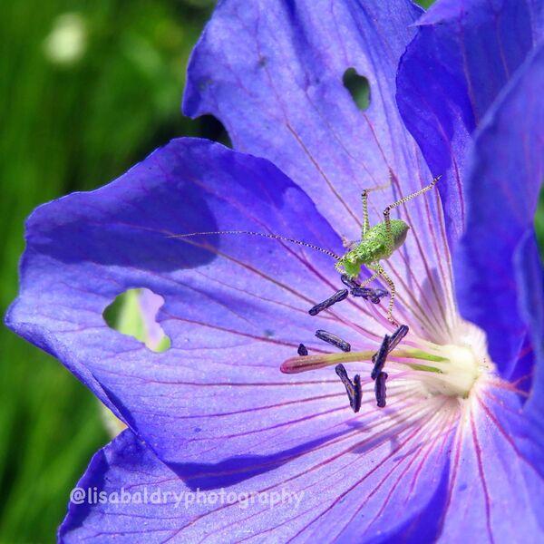 Nature : Wisley Gardens