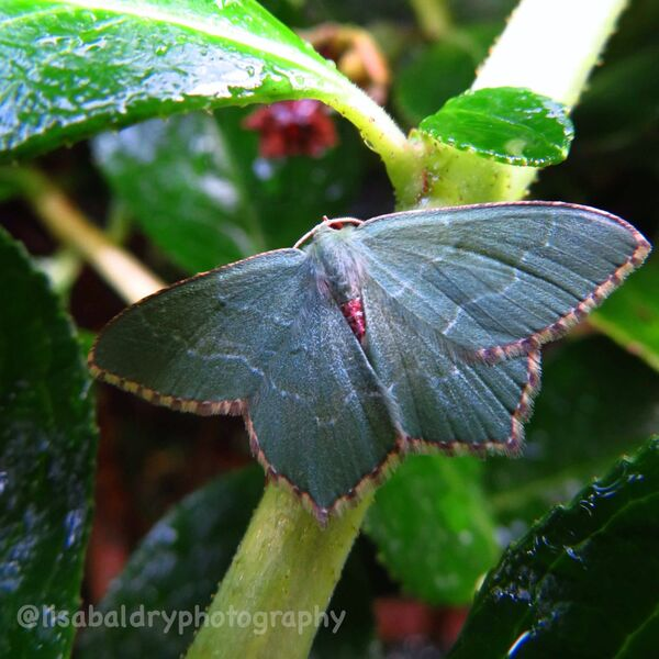 Nature : Butterfly
