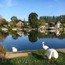 Relaxation along the River Thames (avoiding swans)