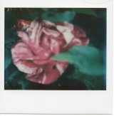 """NOT FADE AWAY"" - A Flower Project"