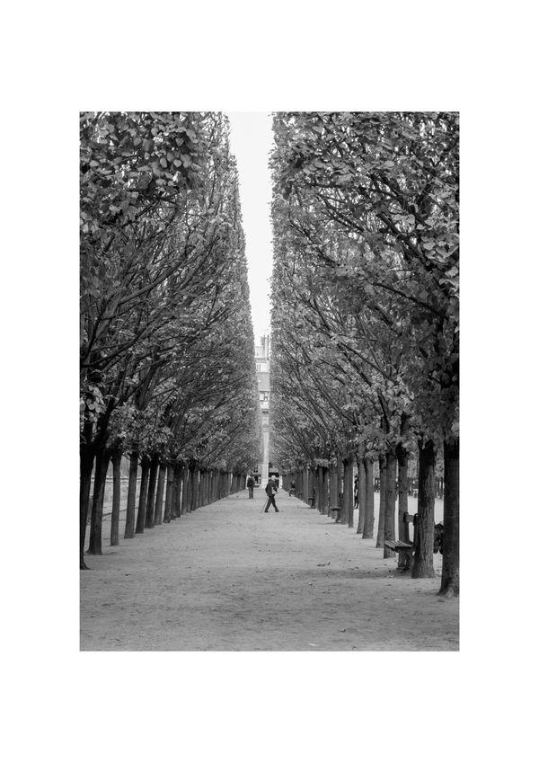 Paris - Palais Royal avec falle