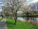 Spring blossom along the Liddelwater River, Newcastleton