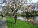 Spring blossom along the Liddelwater River, Newcastleton