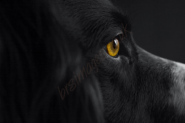 """Golden Eye"""