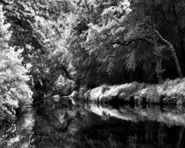 """""""River Reflections"""""""