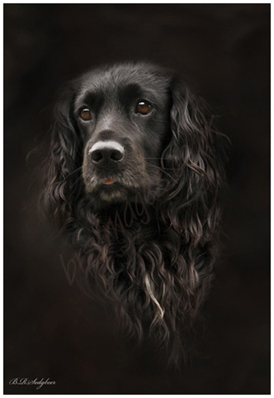 """Toby"" Pet portrait"