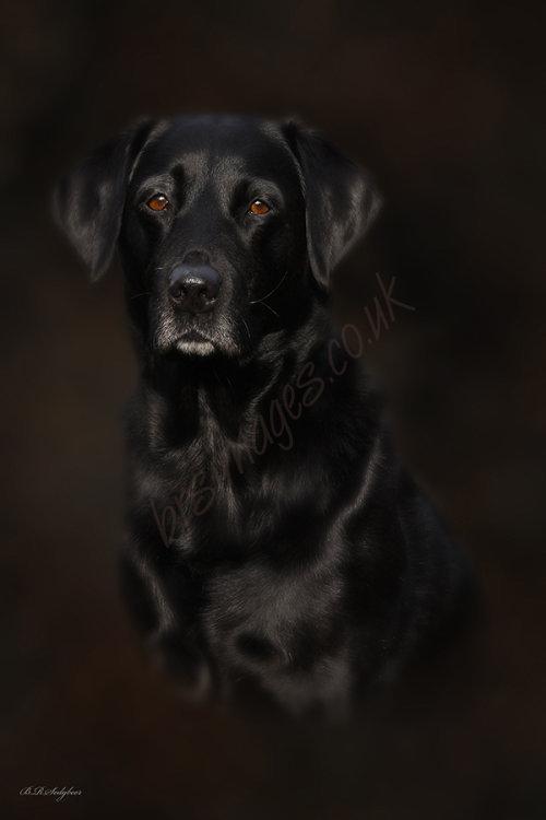 """""""Ebony"""" Pet Portrait"""