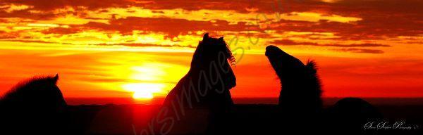 """""""Dartmoor Sunrise"""""""