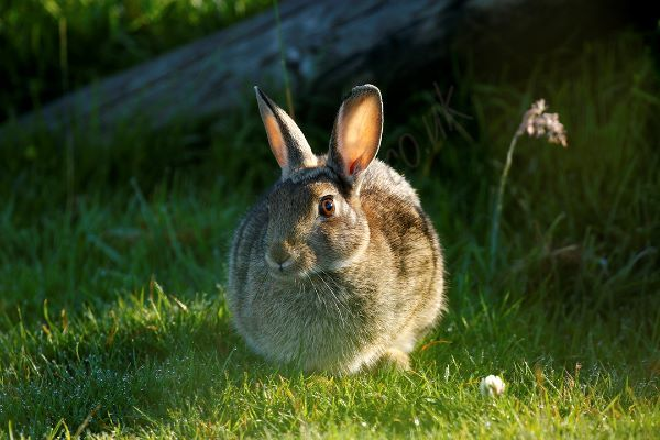 """Bunny Time"""