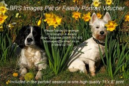 Pet or Family Portrait Voucher