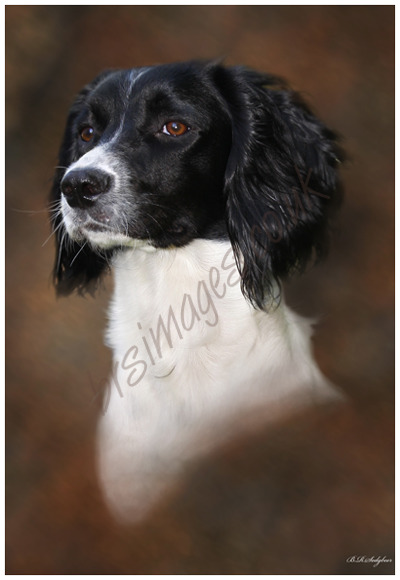 """Poppy"" Pet Portrait"