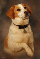 """""""Rio"""" Pet Portrait"""