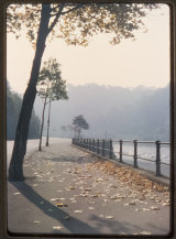 A Misty Autumn Scene along the Portway. October 1963