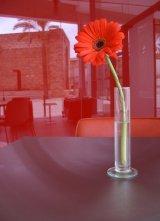 'Red Flower'