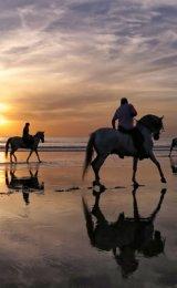 First Place 'Sea Horses' Rachel Domleo