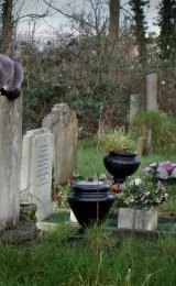 Second Place 'The Cemetery Cat' Bruce Gibbs