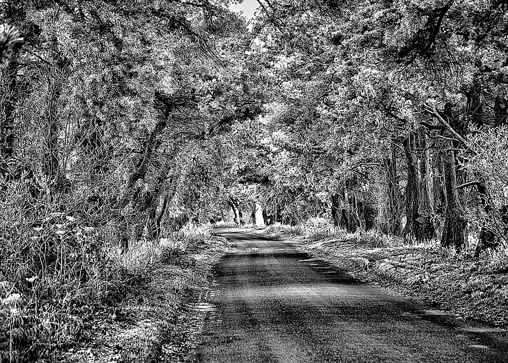 A frosty Norfolk road