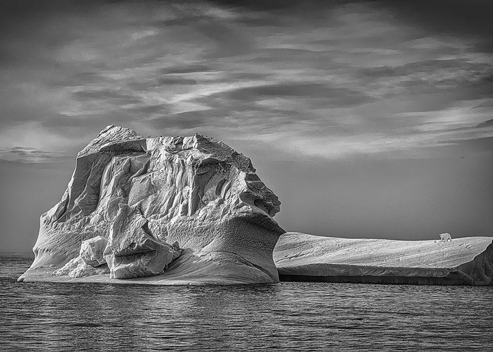 Bear on Iceberg