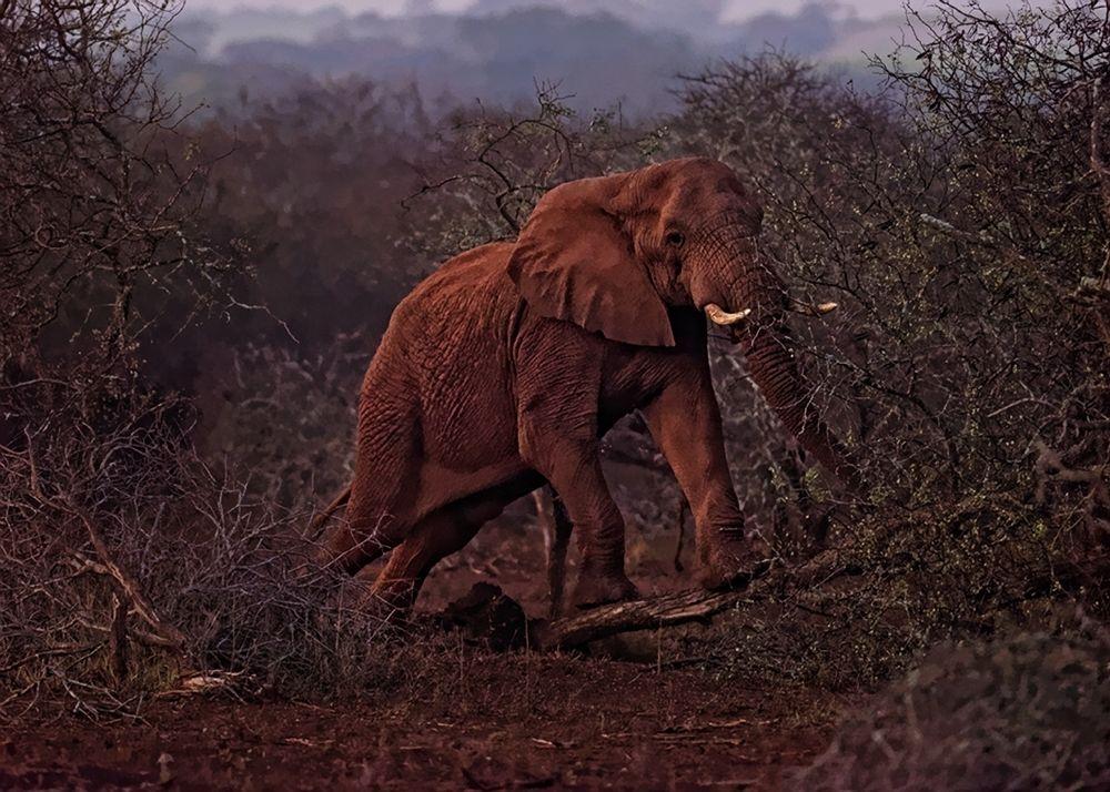 Pushing down a tree at dawn