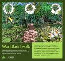 Woodland Walk 2