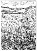 Biodiversity habitat - Farmed land